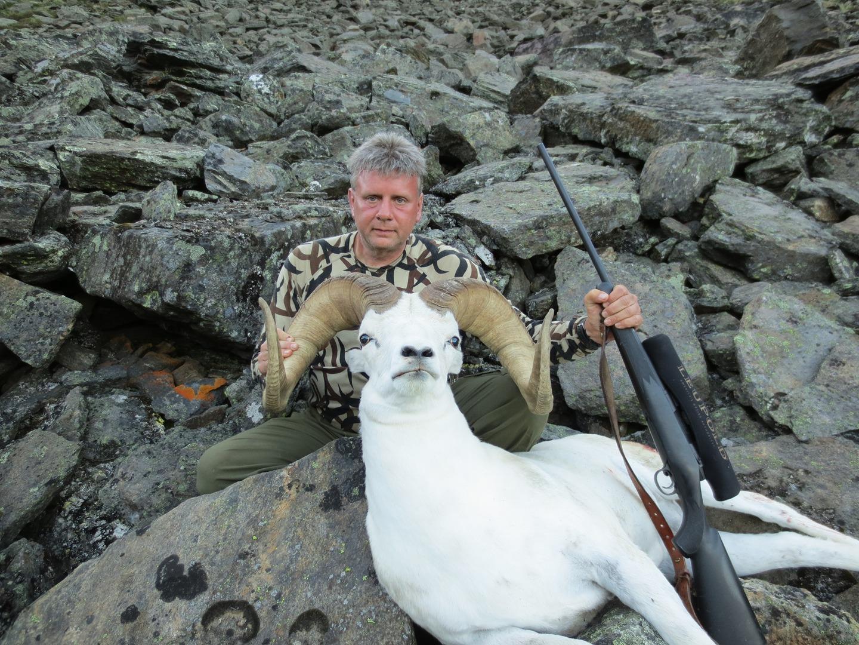 Sheep taken with Boswell Custom Rifle